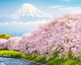 【2020年版・開花予想】今年の桜の開花予想は?最新情報をお届け!